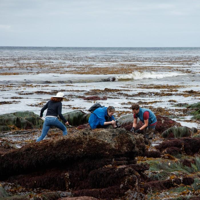 bioblitz near the ocean
