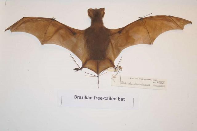 Bat, Collections, Natural LA