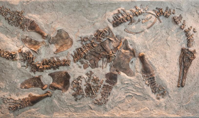 pregnant plesiosaur in dinosaur hall