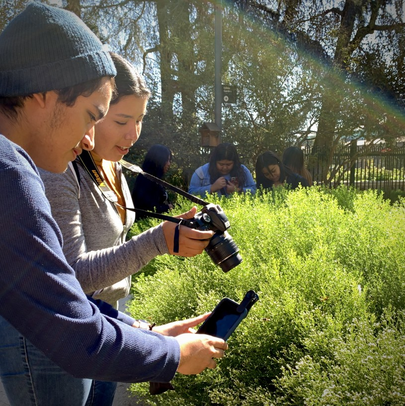 Students photographing insects on a bush using cameras and phones with clip-on lenses