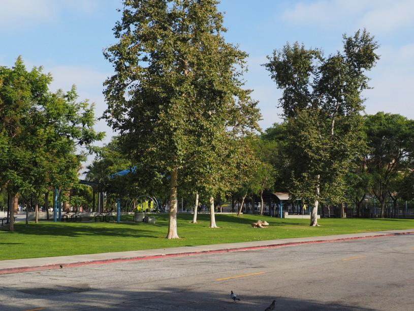 Park, urban, trees, UPark