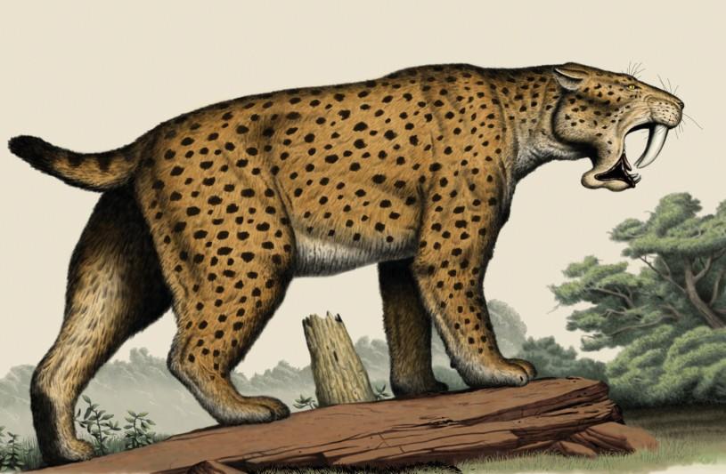 Saber toothed cat illustration spots