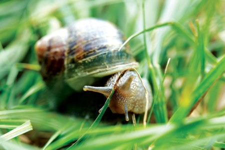 close-up of a snail in grass