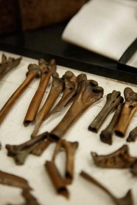 fossils of bones